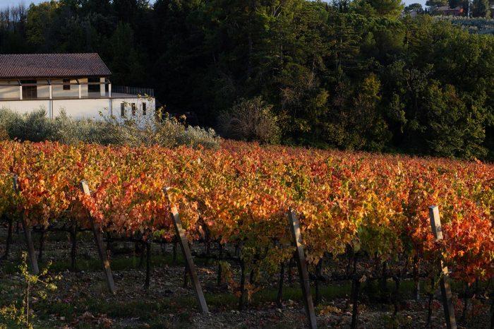 Cantina di Villa Mongalli - Immagine13