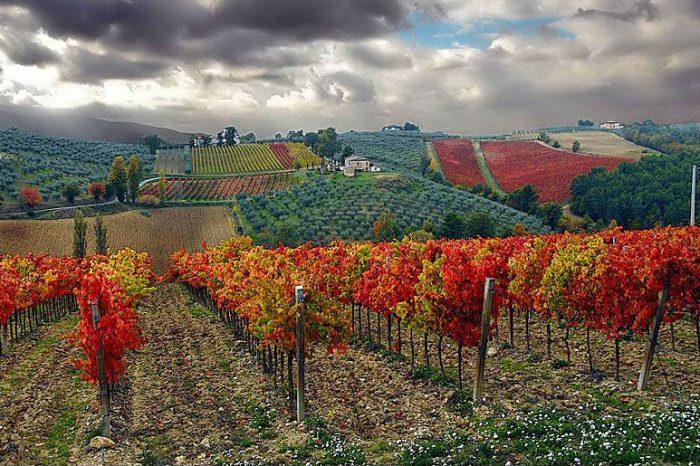 Villa-Mongalli_vigna-ottobre