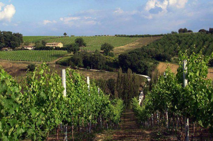 Azienda_Agricola_Castelgrosso